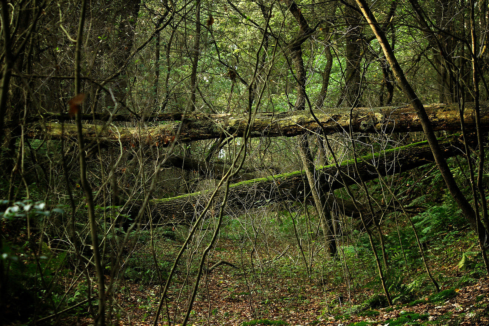 Land Trust Preserves Indiana's Last Old-Growth Forest | WBAA