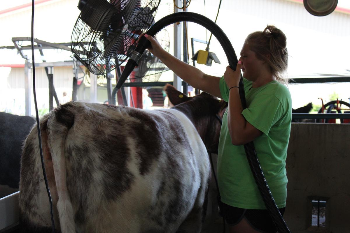 As Agriculture Modernizes, County 4-H Fairs Work To Keep Pace