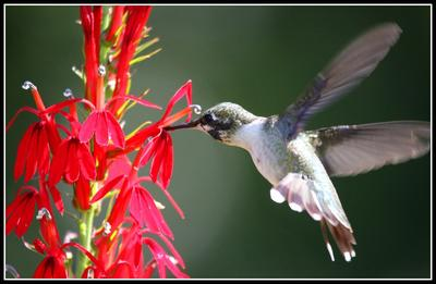 Landscape Trees and Shrubs for Both Birds and Bees | WCAI
