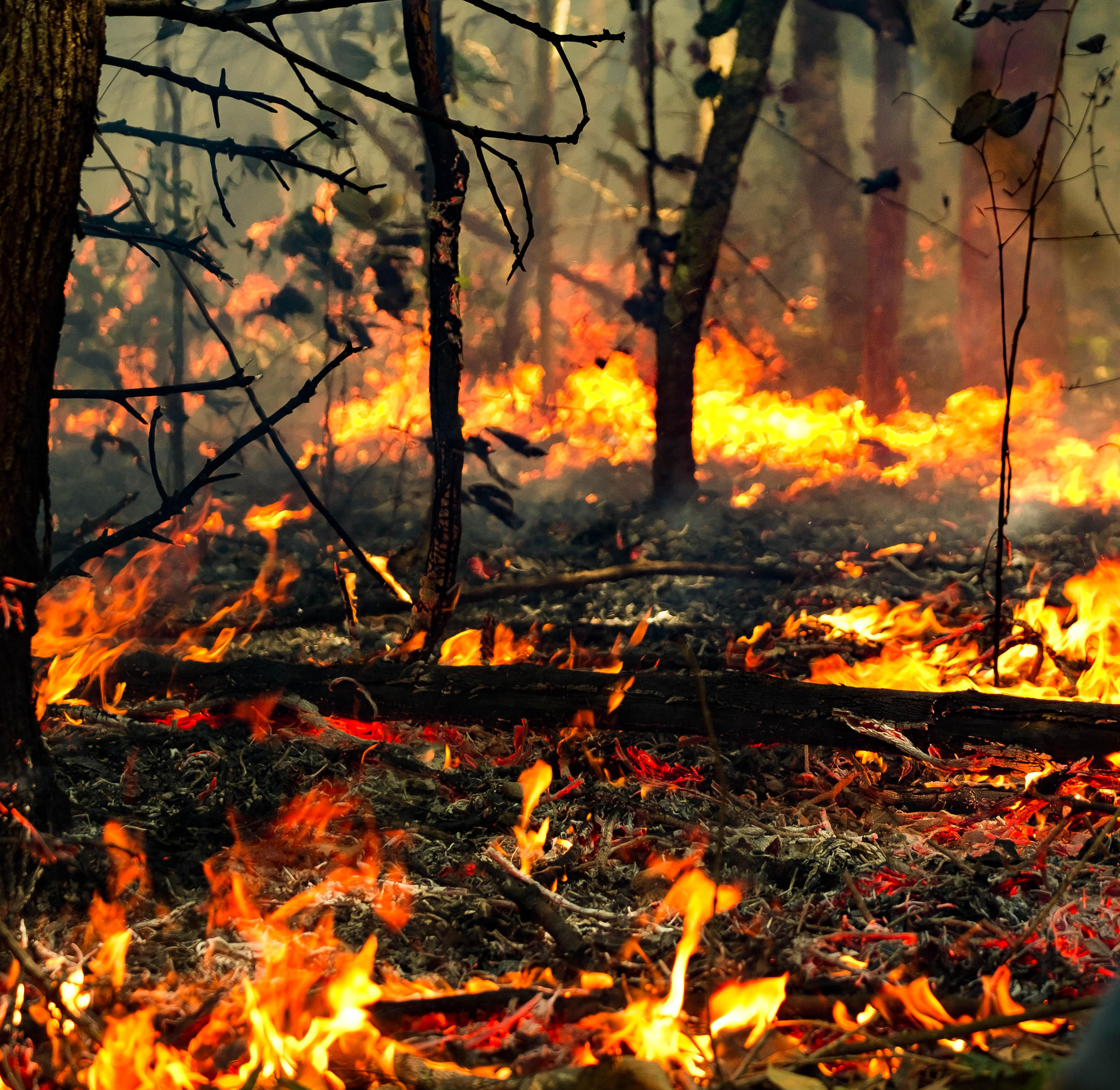 Carbon Dioxide Released By Amazon Fires Could Hasten Climate
