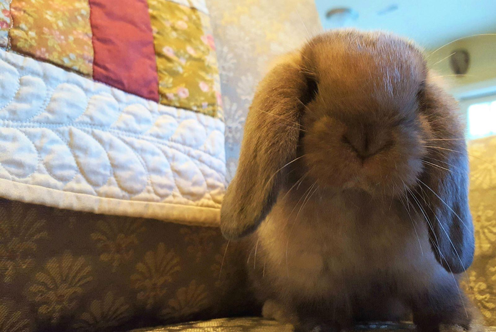 Know The Facts Before Buying Pet Bunny For Easter Peoria Public Radio