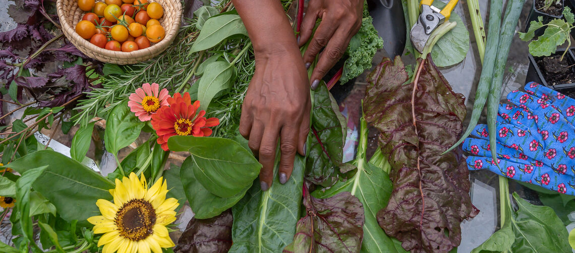 Delaware gardeners asked to help fight food insecurity