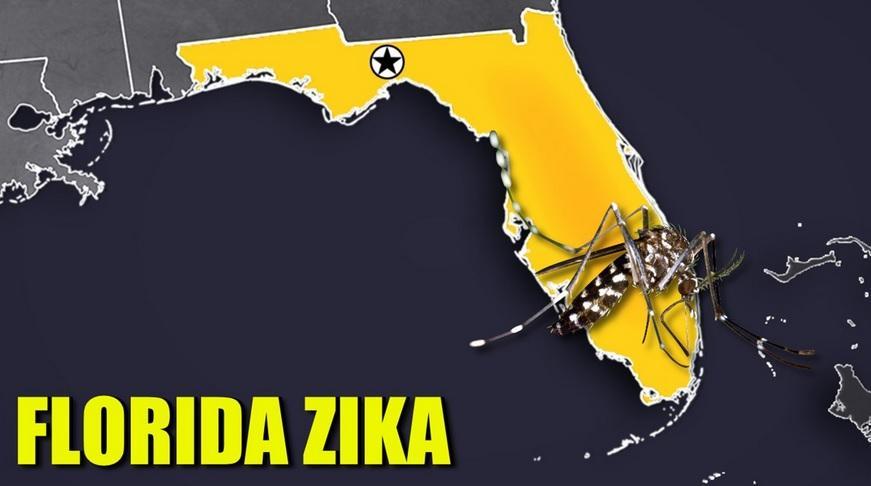 Despite Predicted Slow Down During Winter Season, Zika