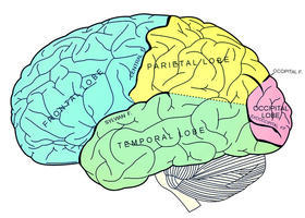 How Trauma Abuse And Neglect In >> Childhood Trauma Leads To Brains Wired For Fear Side Effects