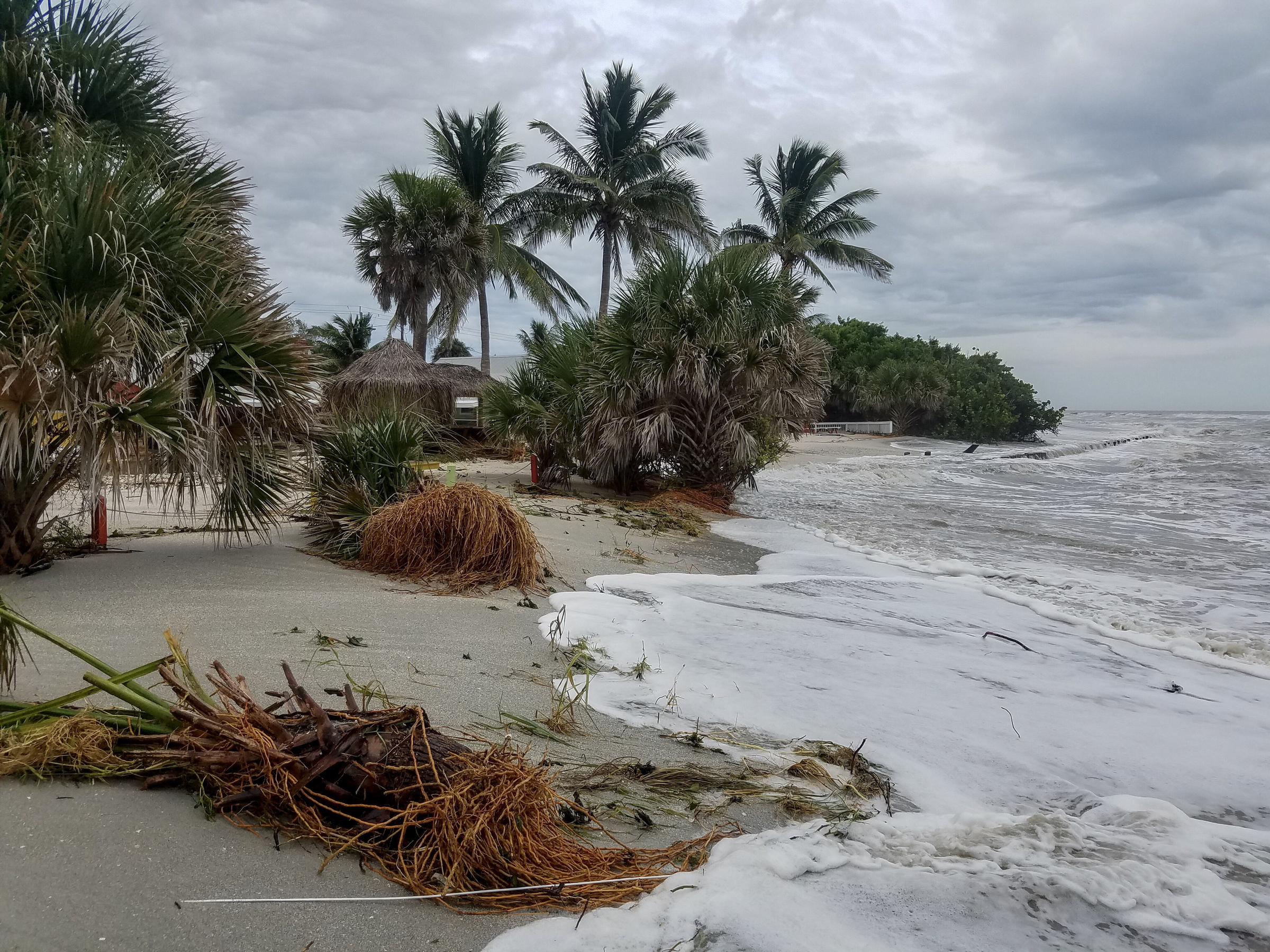 Palm Fronds And Other Debris Line The S Of Blind P Beach On Sanibel Island