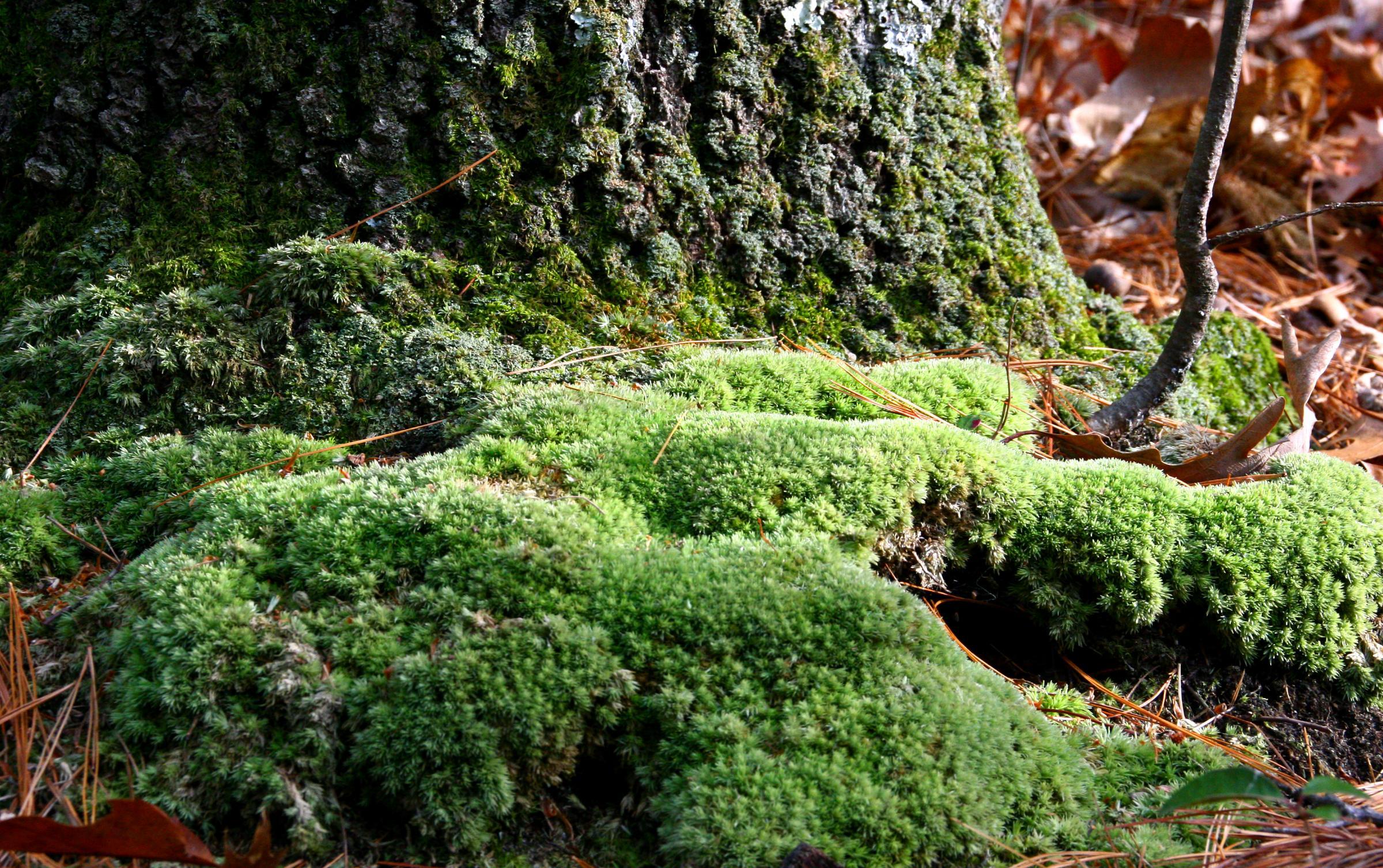 Glt S Grow Moss As Lawn Alternative Wglt