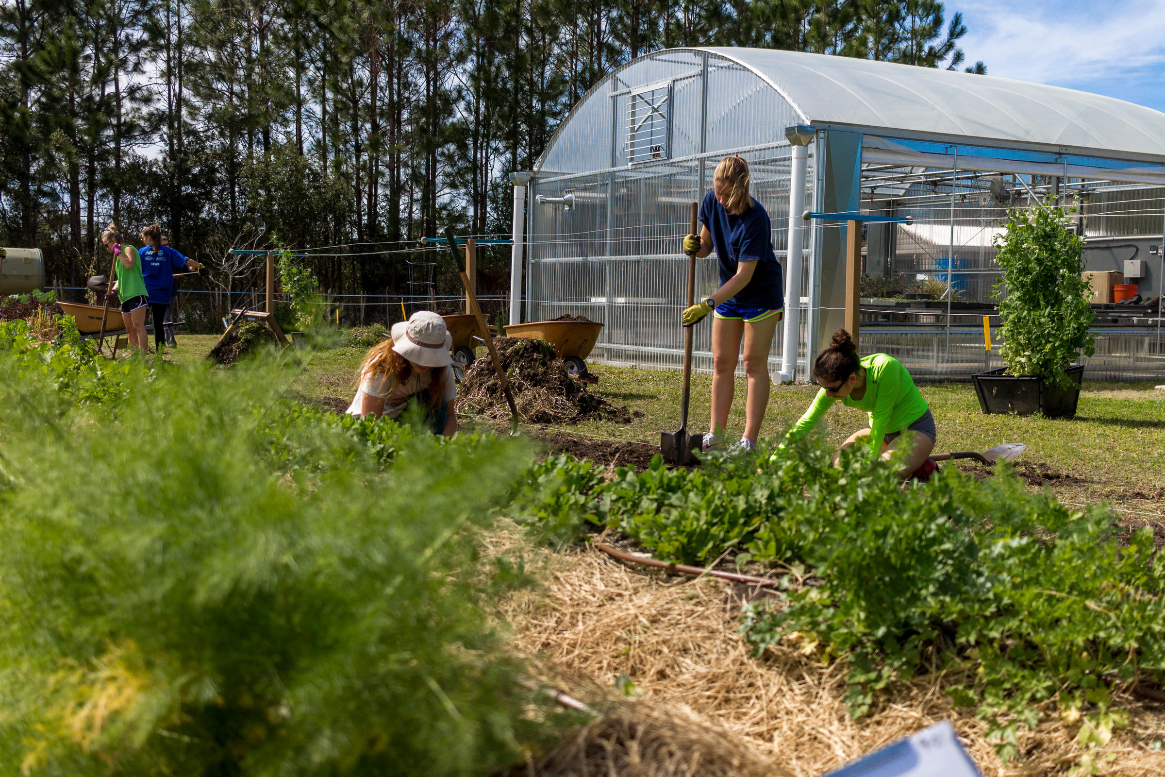 UNF Garden Selling Produce To Campus Food Supplier   WJCT NEWS