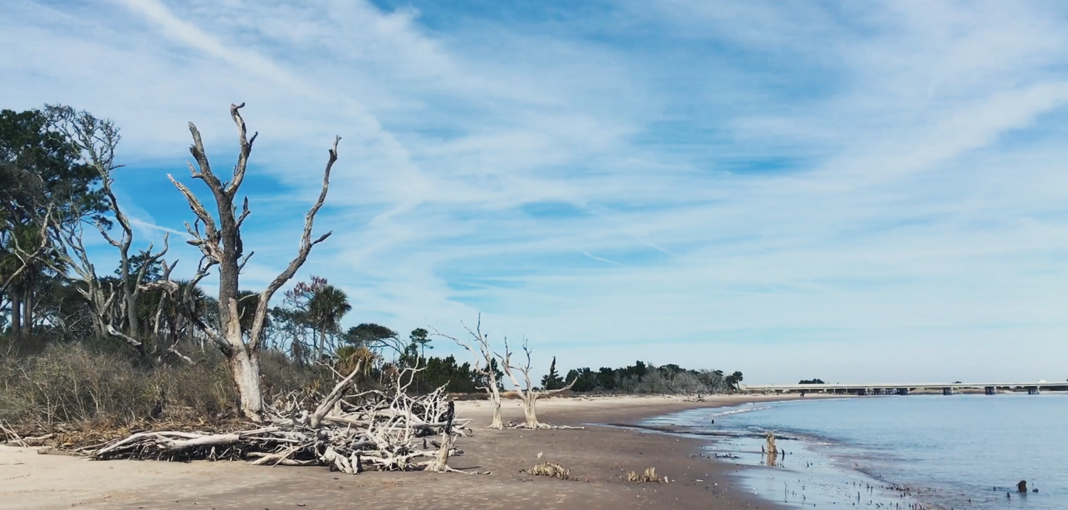 Grazing On The Nau Sound Boneyard Beach Of Talbot Island State Park Is Known For Skeletal Tree Remnants That Line It Up