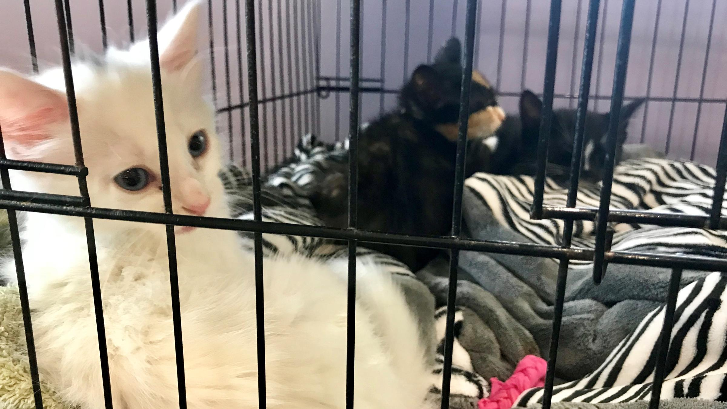 More Than 900 Cats, Dogs Available To Adopt At Jacksonville