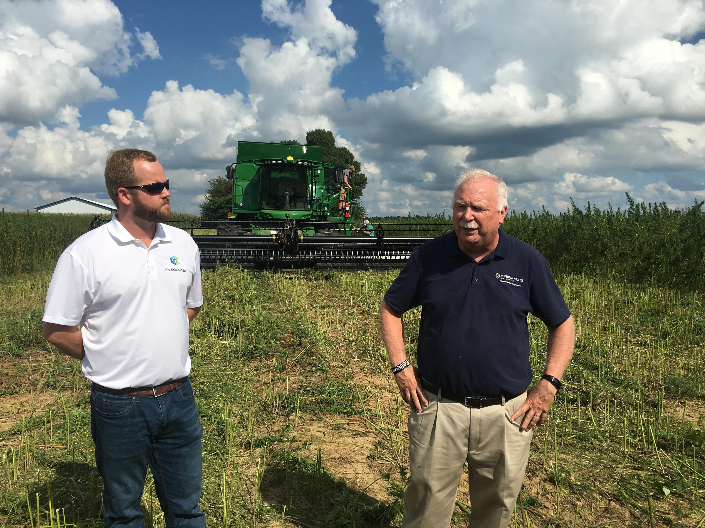 Murray State Starts Hemp Harvest with Combine, Studies