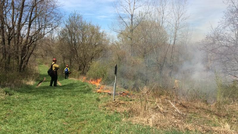 photo of controlled burn
