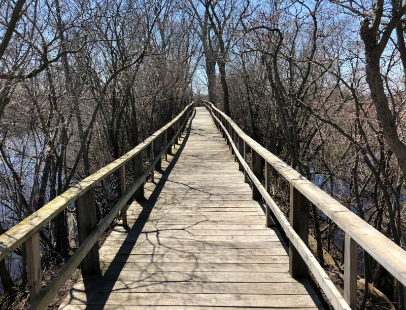 A stretch of boardwalk through Magee Marsh is uncharacteristically empty in early spring just ahead of the arrival of warblers that marks the Biggest Week in American Birding.