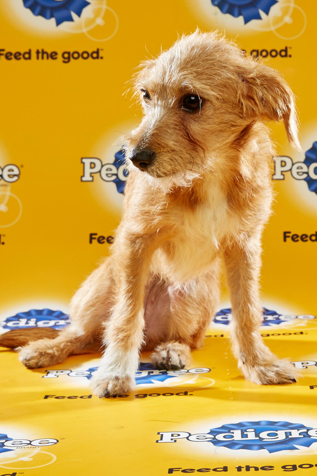 Kentucky Puppies to Take Field in Puppy Bowl XII | WKU