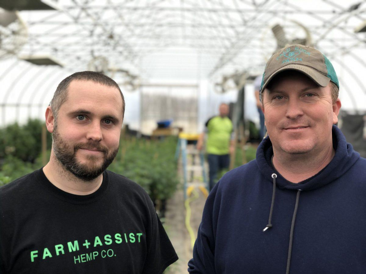 Over Hyped Hemp Amid Price Drop And A Big Bankruptcy Some Farmers Feel Burned Wku Public Radio