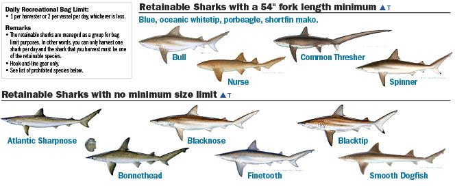 Just Some Of The Sharks That Can Be Seen Off Florida S Coast