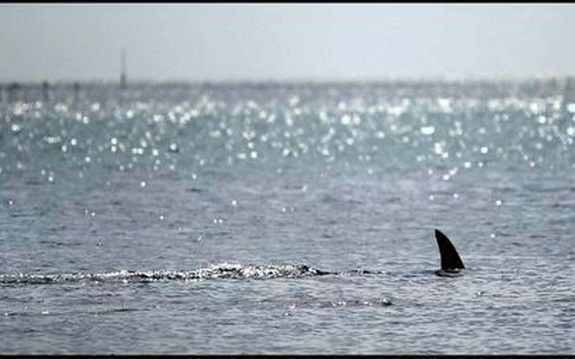 Here S Another Reason To Love South Florida Clear Ocean It Keeps Sharks Away From You
