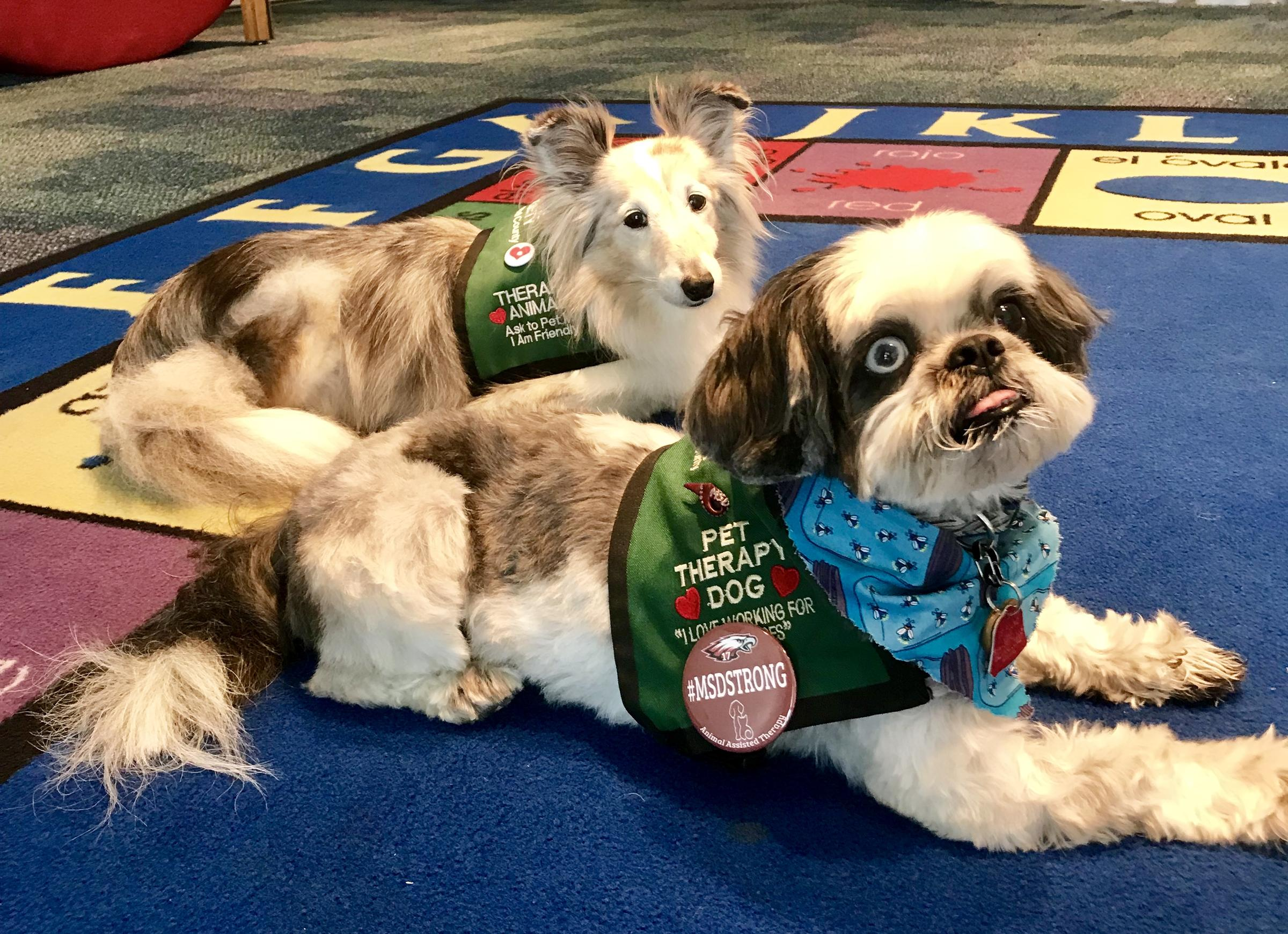 Kids Coming To Wags Tales Get Individual Reading Time With Therapy Dogs Like Sydney Left And Zoe Right From The Humane Society Of Broward County