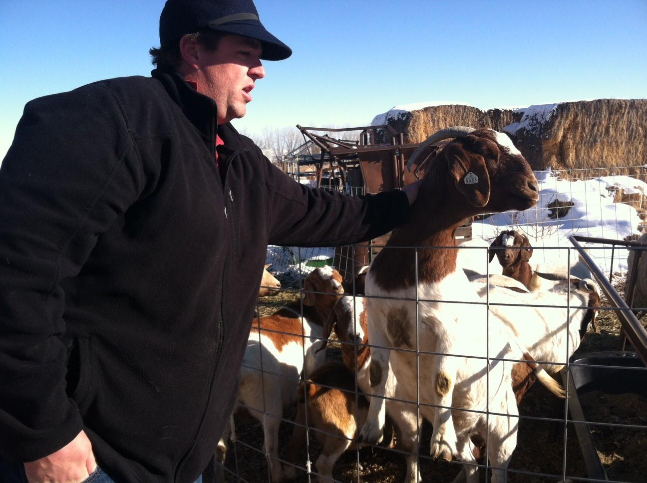 America's Reluctant Love Of Goats And Their Meat   Wyoming Public Media