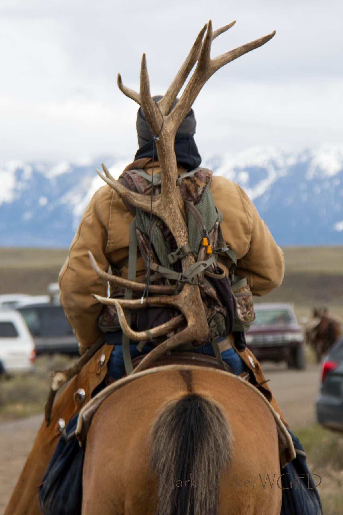 Shed Antler Hunting Brings In Big Bucks (Both Kinds