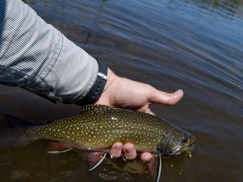 Wyoming Hunting And Fishing Licenses To Get Longer Lifespan