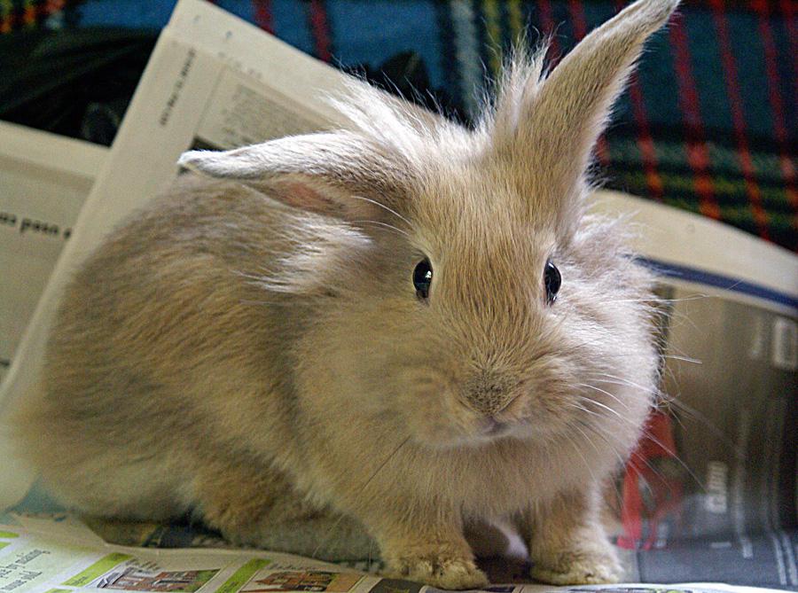 Easter Bunny Alabama Public Radio