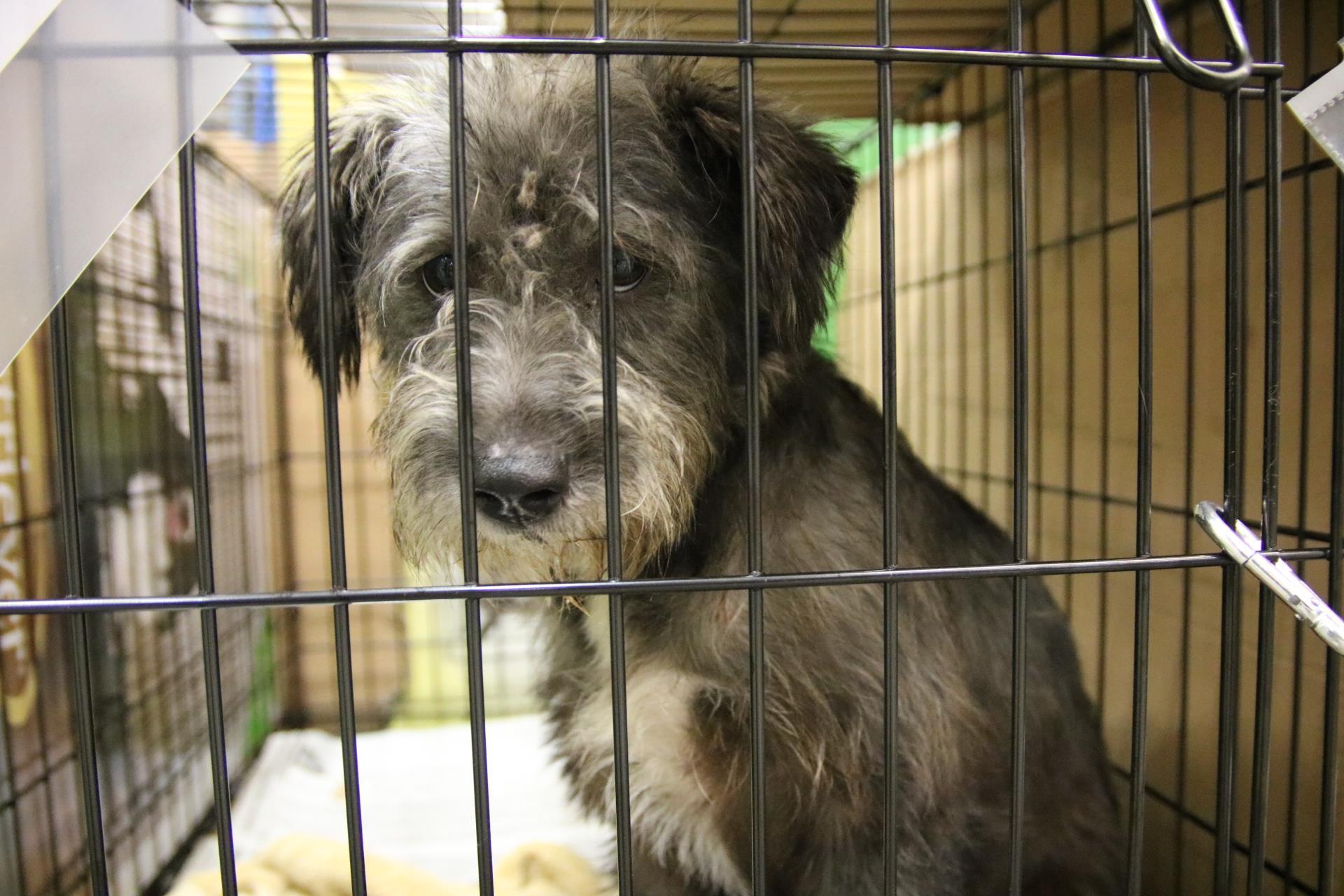 Hurricane Irma Evacuees - Pets   Alabama Public Radio   Toy Dog Rescue Atlanta