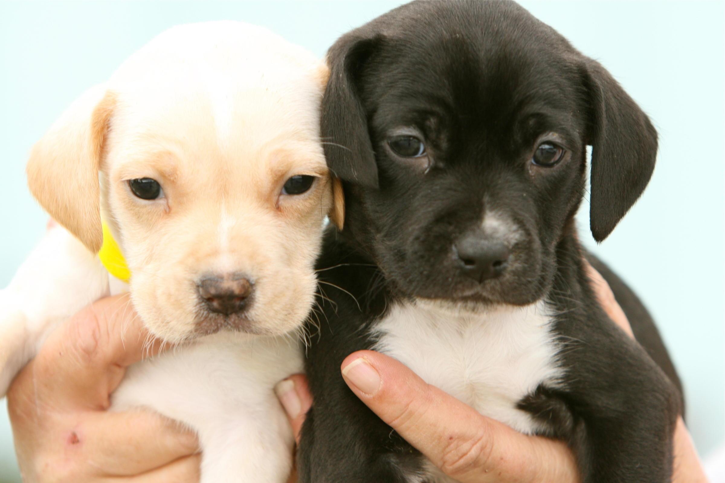 Puppy Mills | Alabama Public Radio
