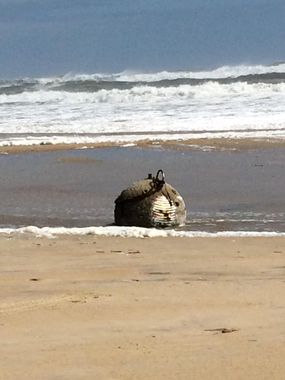 Pelicans - Myrtle Beach, South Carolina   Pelican, Beach