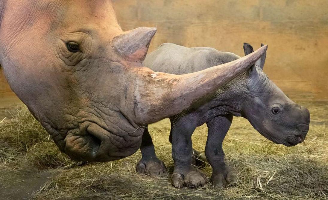 Asheboro Zoo Seeks Help To Name Baby