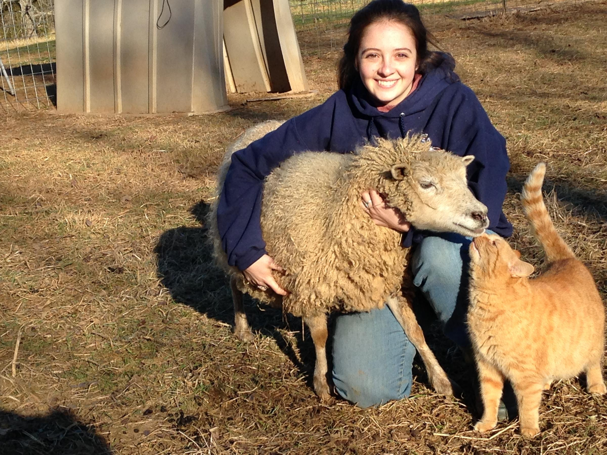 Virginia Student Joins Us Sheep Shearing Team Wvtf