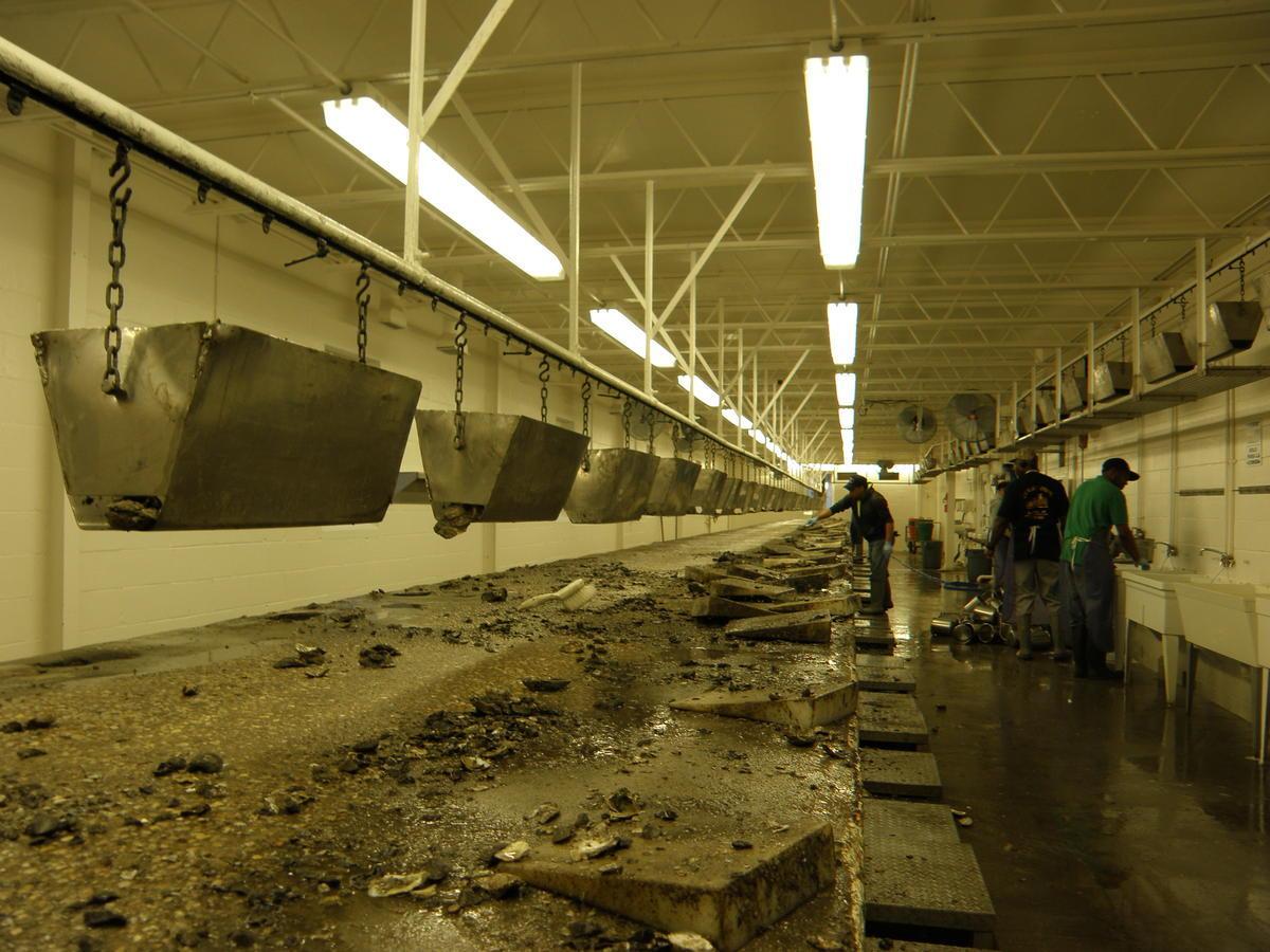 Lack of Seasonal Worker Visas Straps Chesapeake Seafood Industry | WVTF
