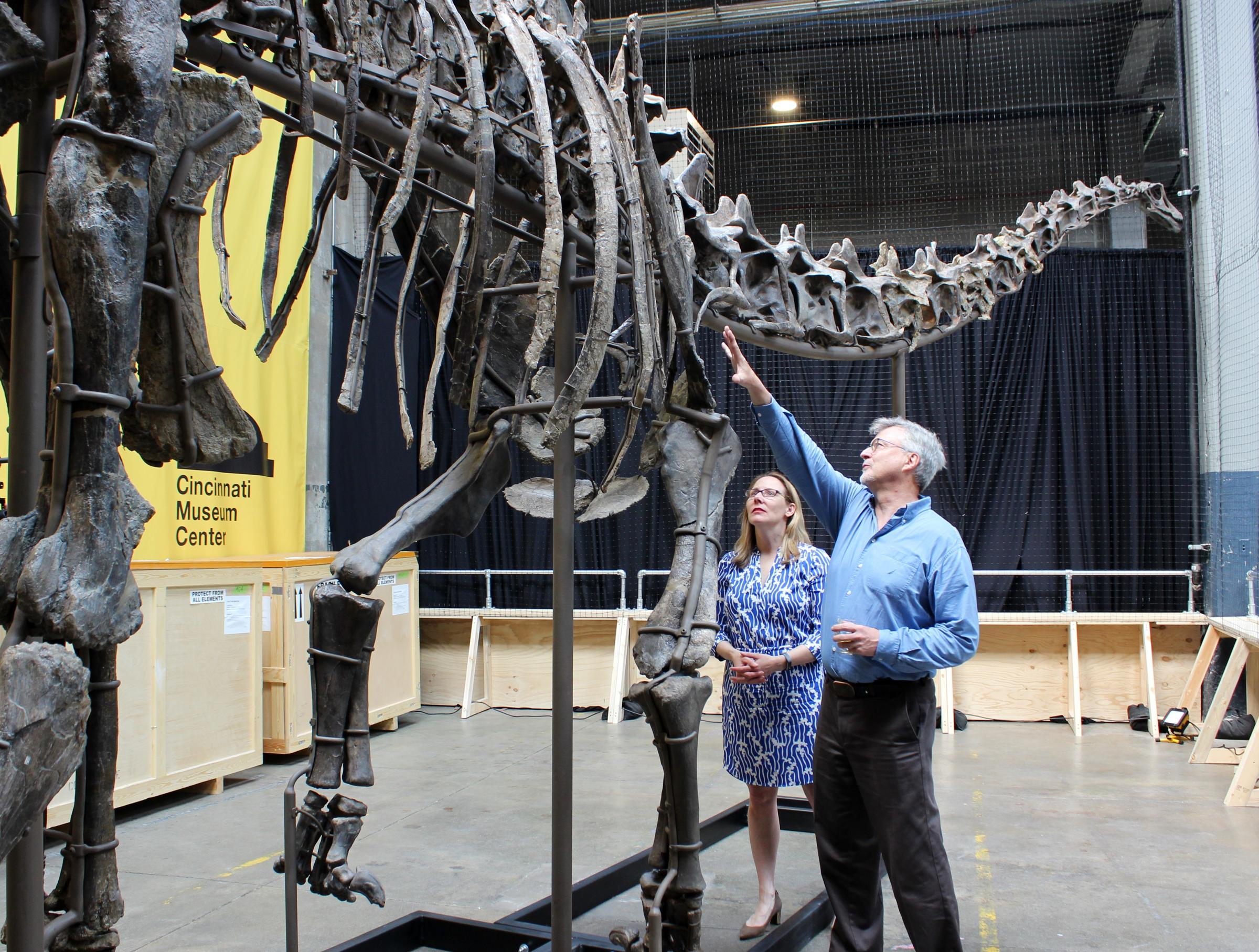 Rare Dinosaur Skeleton On Display At Rhinegeist | WVXU